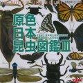 【07/2月・NEW】★原色シリーズ・原色日本昆虫図鑑III